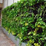 دیوار سبز - شرکت گل آویز