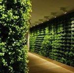 دیوار سبز گل آویز green wall divar sabz golavi.ir 3